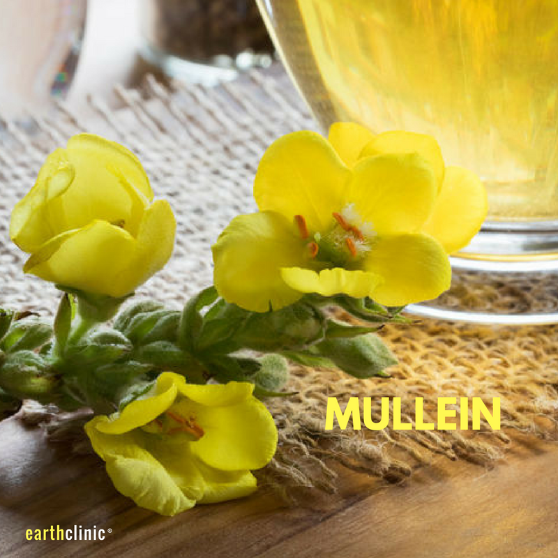 Mullein Health Benefits