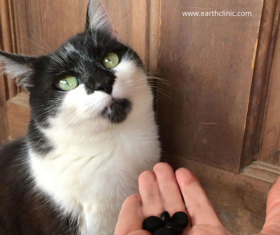 Activated Charcoal for Pets