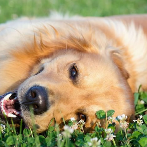 ACV for Allergies in Pets