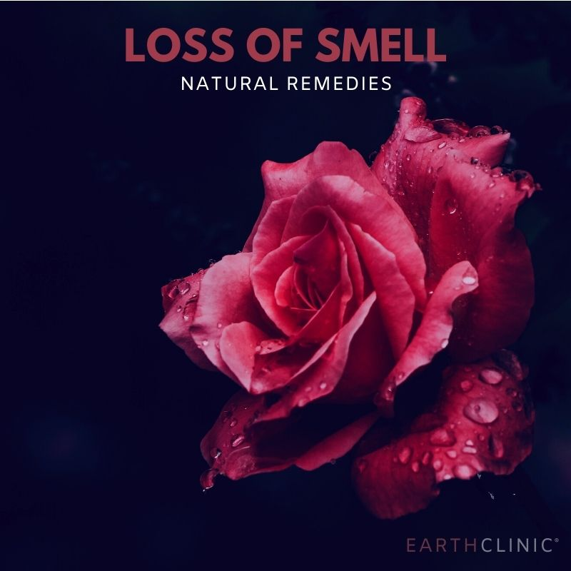 Loss of Smell Remedies.