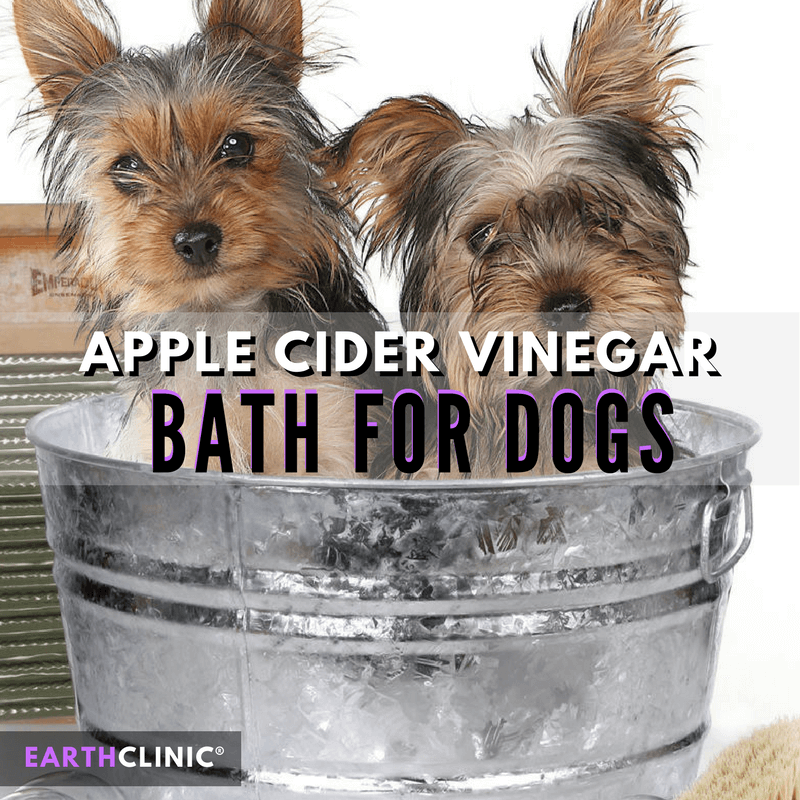 Apple Cider Vinegar Bath for Dogs