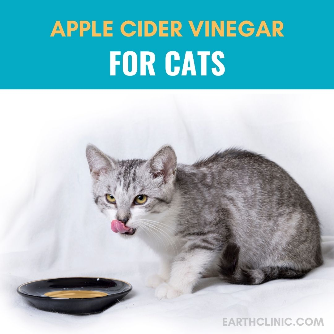 Apple Cider Vinegar for Cats.