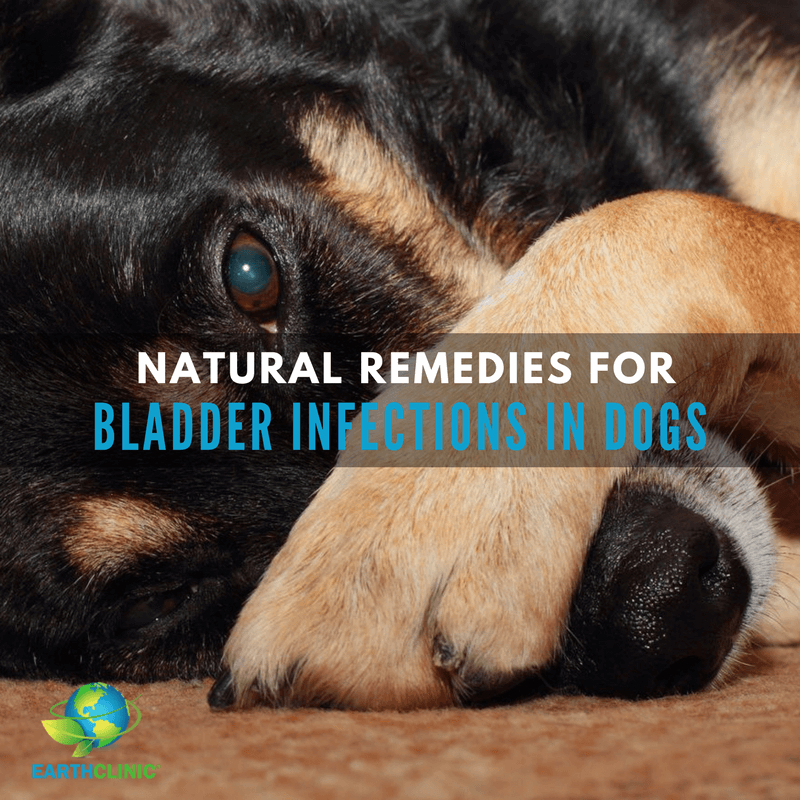 Bladder Infection Remedies for Dogs