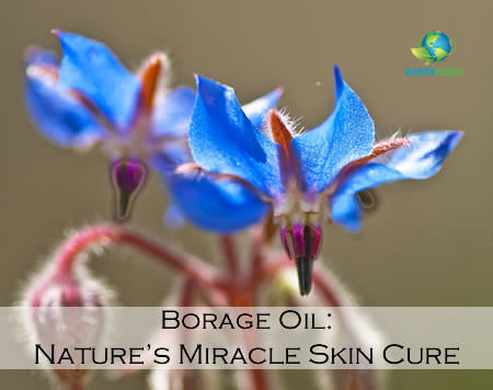 Borage Oil: Nature's Miracle Skin Cure