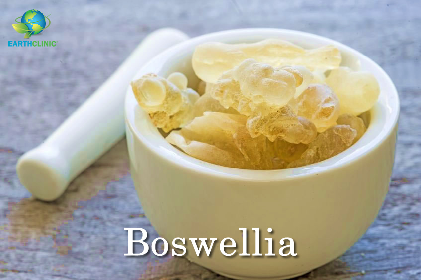 Boswellia's Amazing Health Benefits