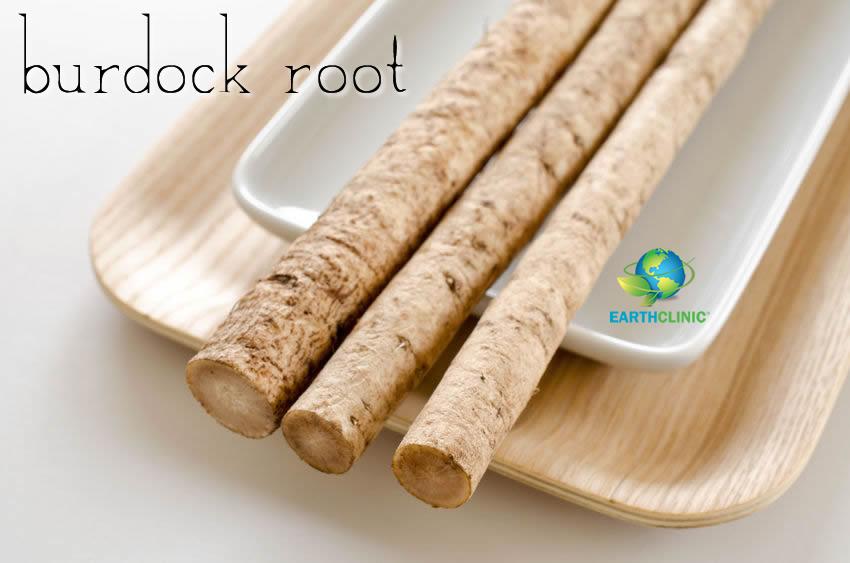 Burdock Root Health Benefits