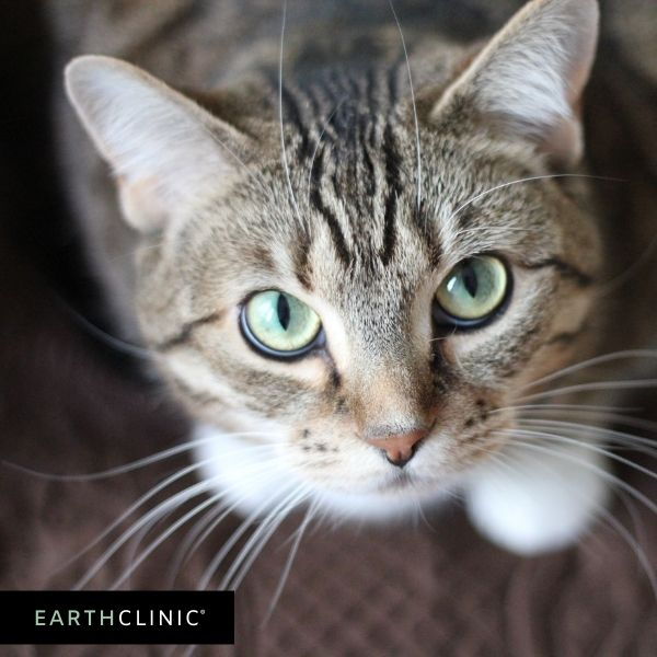 Cat remedies on Earth Clinic.