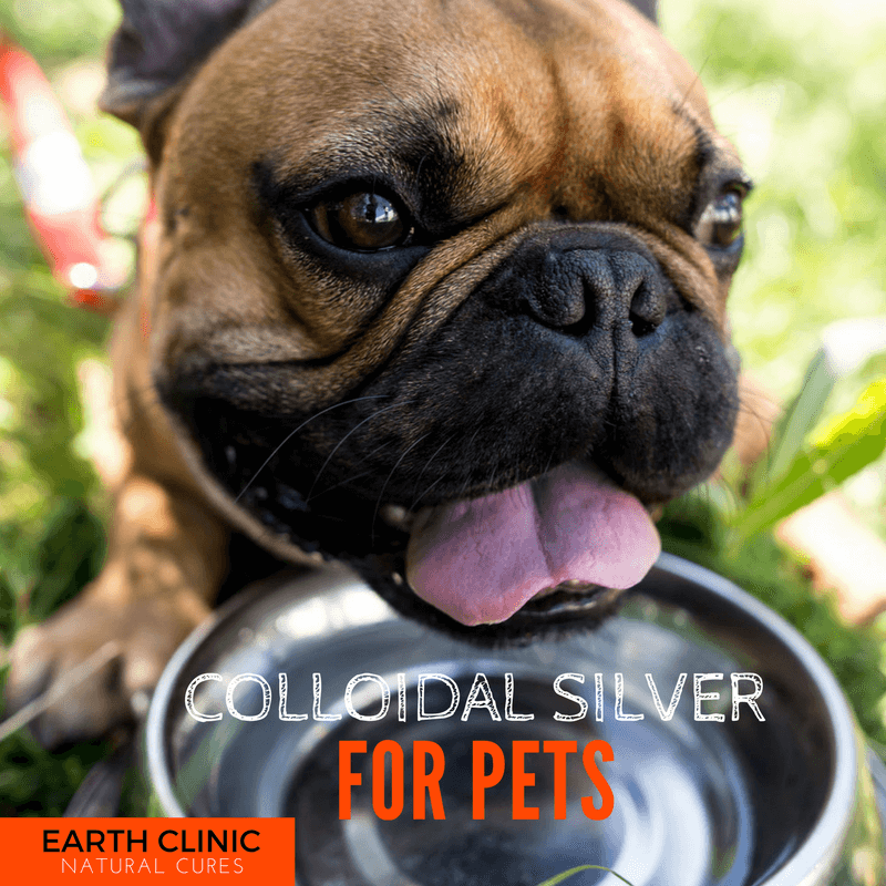 Colloidal Silver for Cats and Dogs