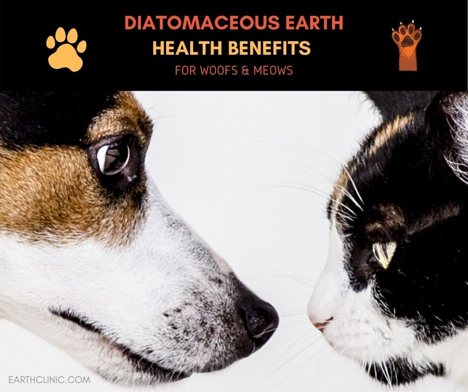 Diatomaceous Earth Benefits for Pets