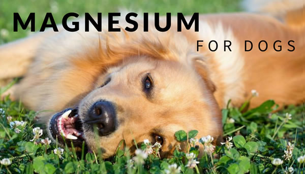 Do Dogs Need Magnesium