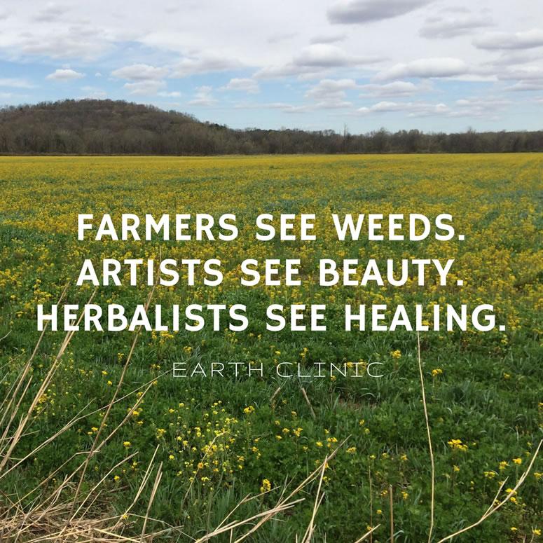 Medicinal Herb Photos