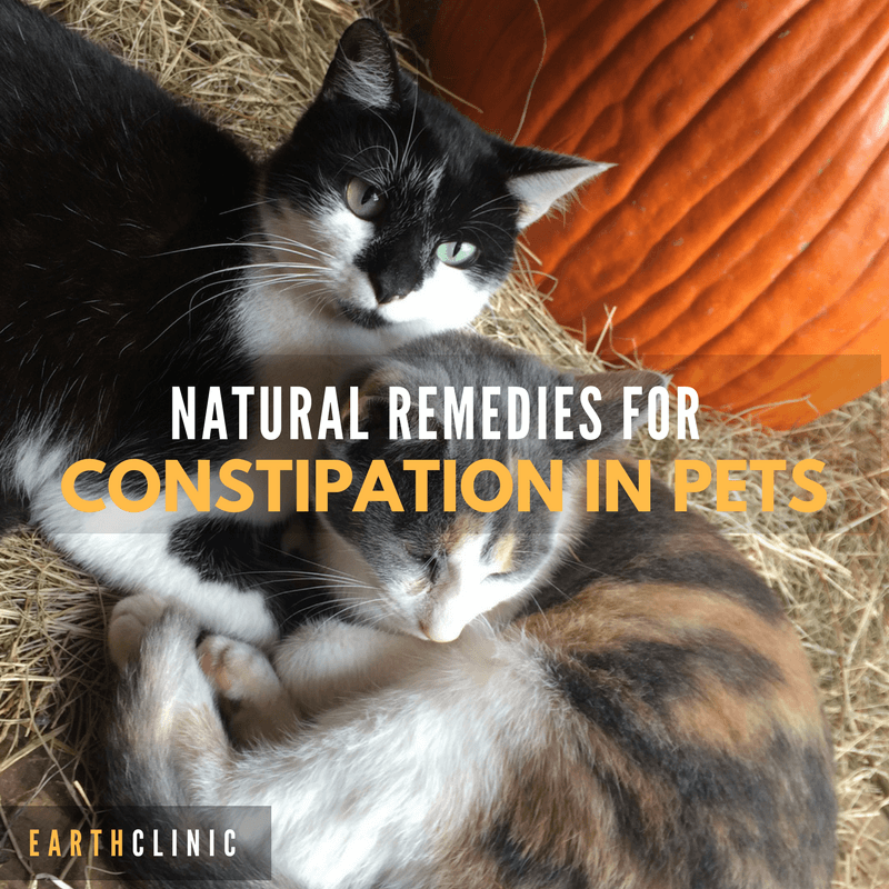 Constipation Natural Remedies Earth Clinic