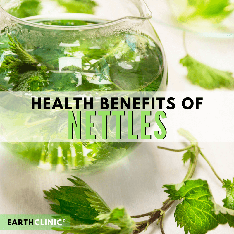 Nettle Health Benefits