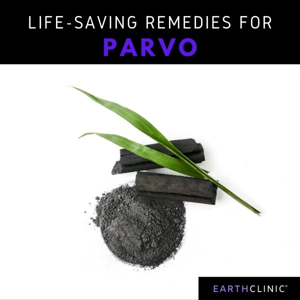Natural Parvo Treatment for Dogs