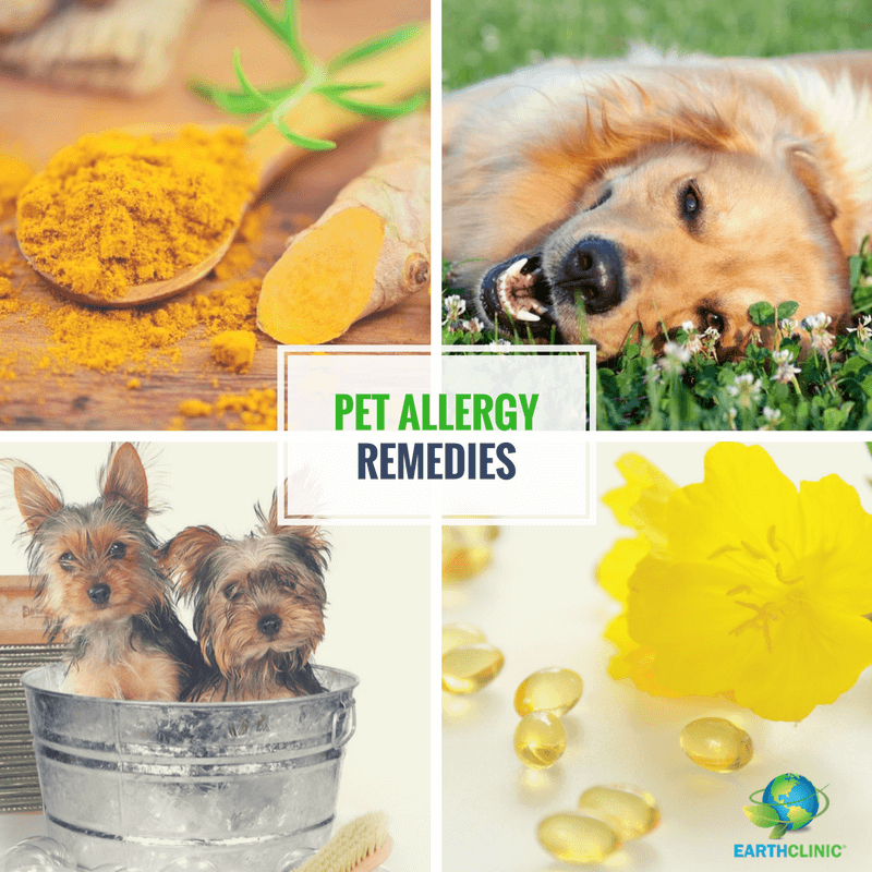 Dog Allergy Remedies