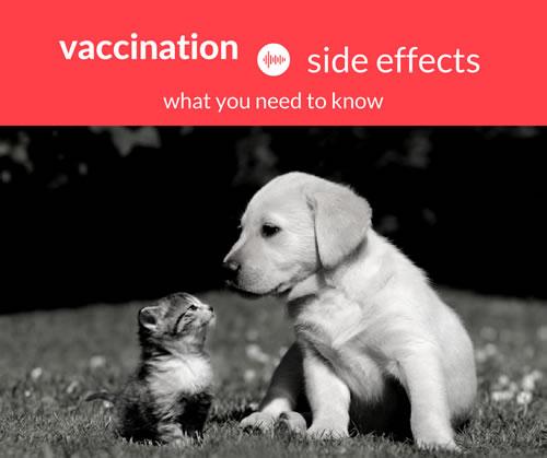dog distemper shot side effects