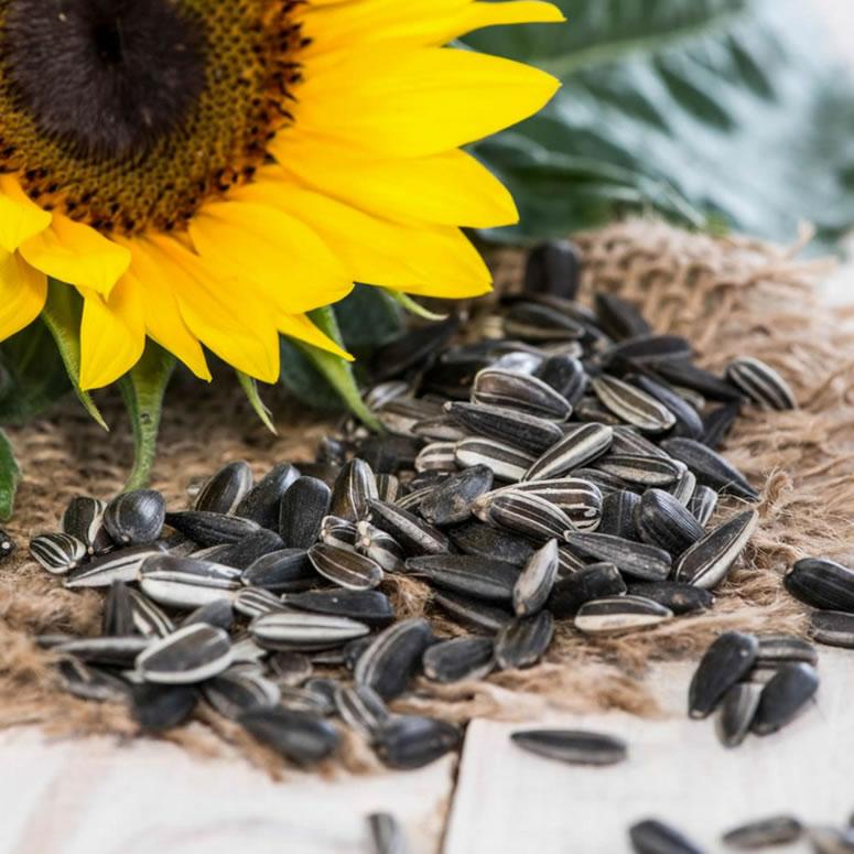 Sunflower Seed Health Benefits