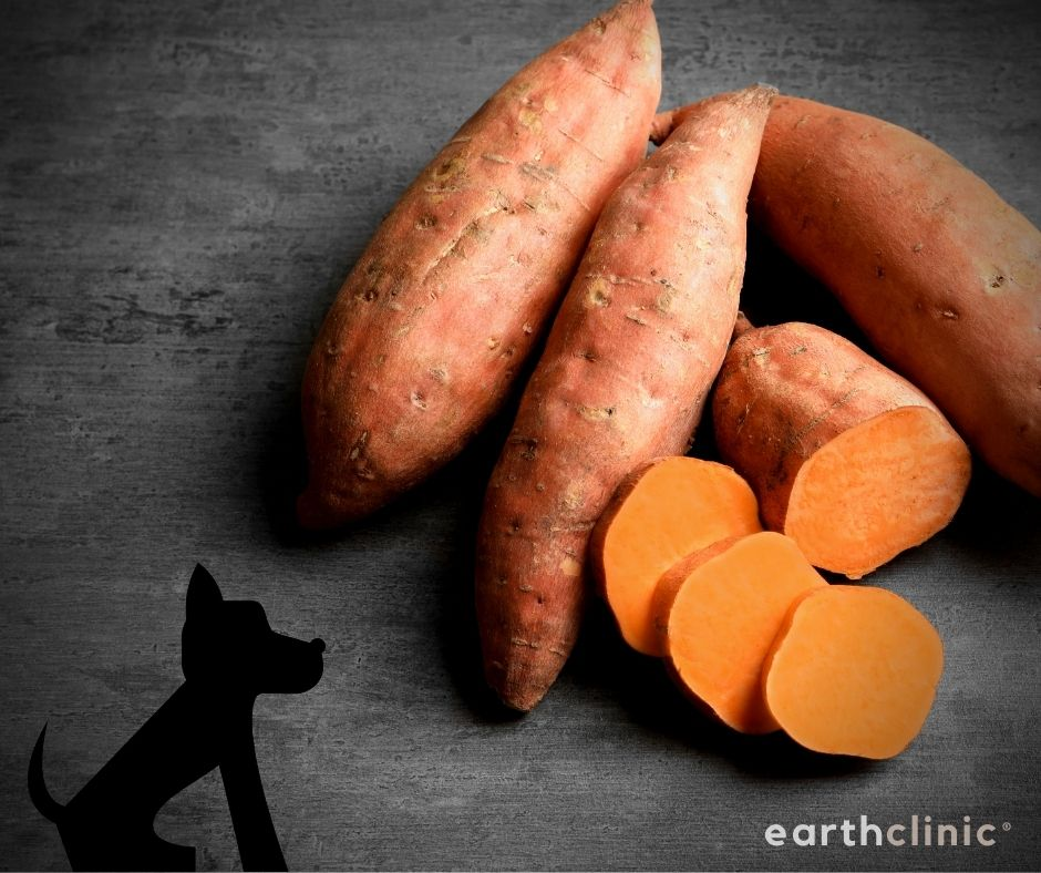 Sweet Potatoes for Dogs