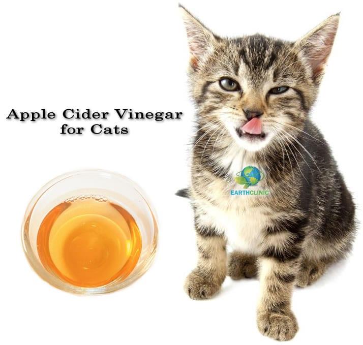 Apple Cider Vinegar For Feline Upper Respiratory Infection