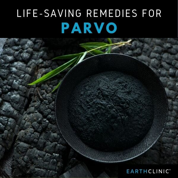 Natural Parvo Treatment for Dogs,.