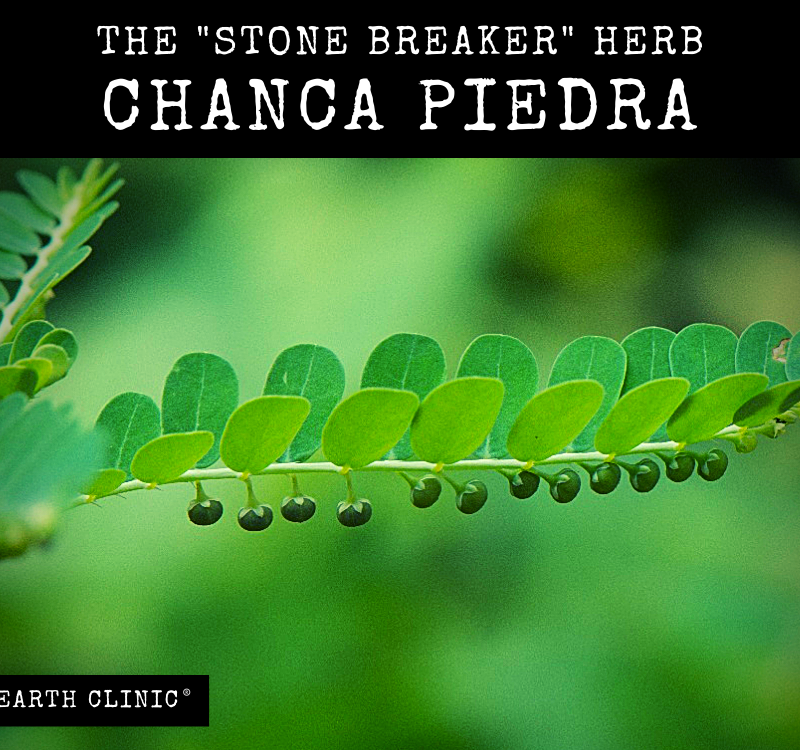 Chanca Piedra Benefits on Earth Clinic.