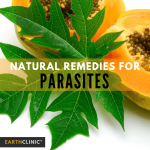 Top natural cures to eliminate parasites
