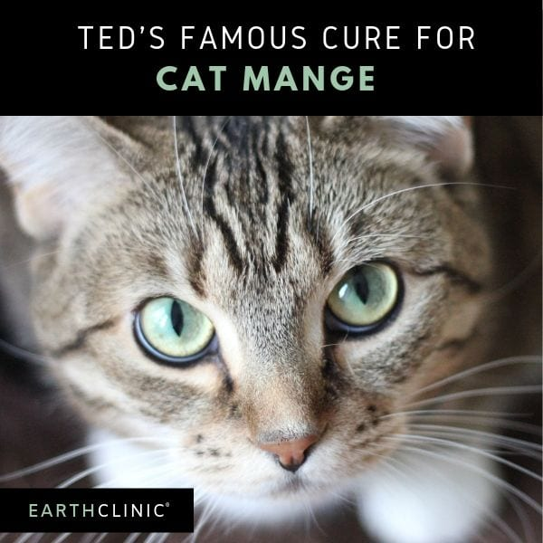 Cat Mange Treatment Using Ted's Famous Remedies