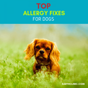 Top natural allergy remedies for dogs