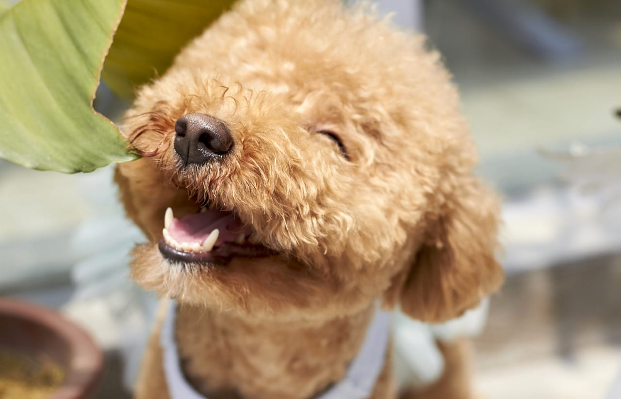 Natural Remedies to Improve Oral and Dental Pet Health - Earth Clinic®