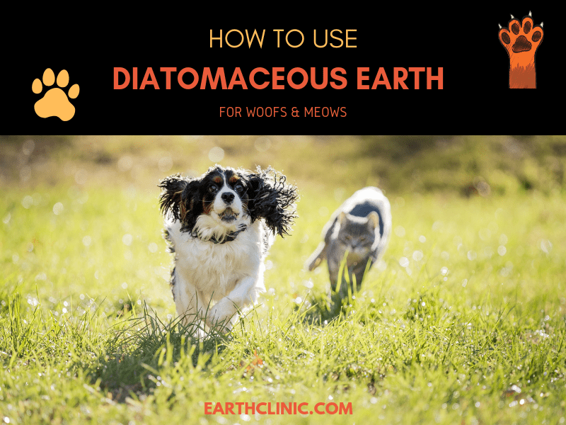 Learn how to use diatomaceous earth on your pet