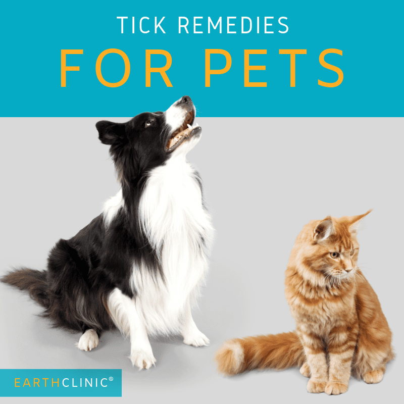 Top tick home remedies for pets.