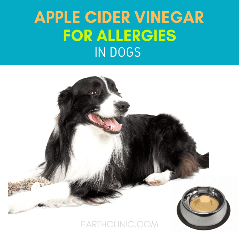 Apple Cider Vinegar for allergies in dogs.