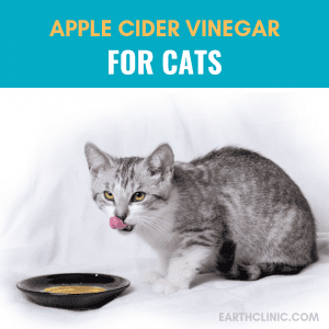How to feed apple cider vinegar to your cats