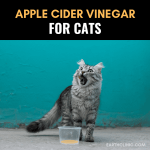 How to Give Apple Cider Vinegar to Cats