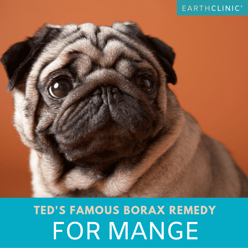 Borax for mange remedy on Earth Clinic.
