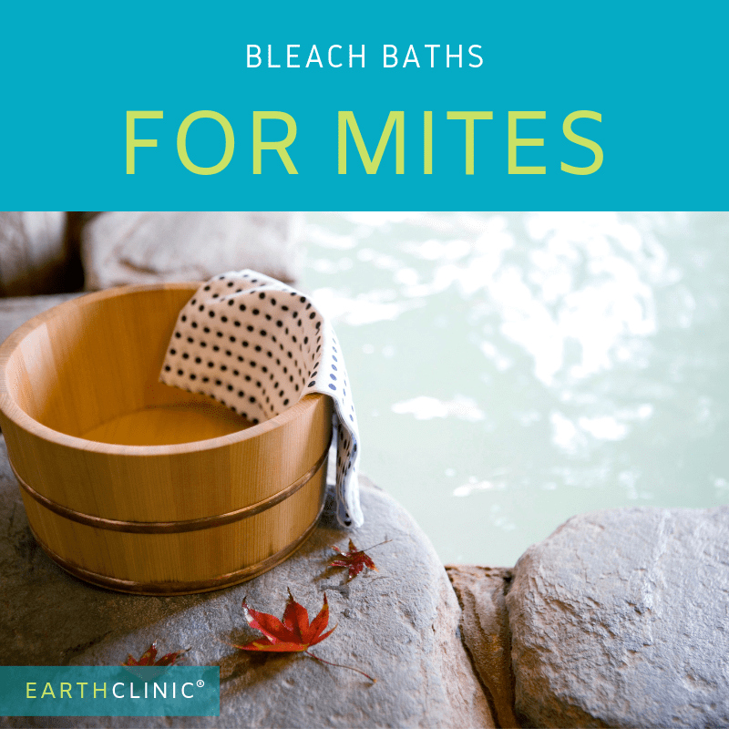Bleach baths for mite infestations.