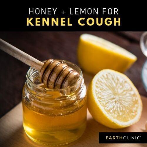 Honey Lemon remedy for kennel cough.